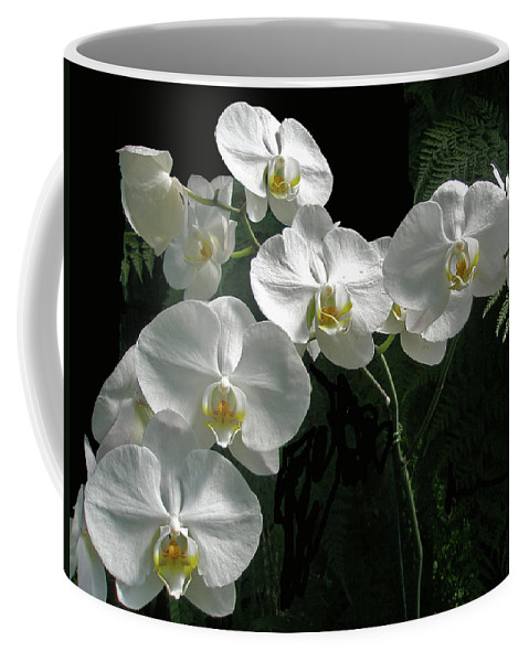 Orchid Coffee Mug featuring the photograph White Moth Orchid Phalaenopsis And Ferns by Mother Nature