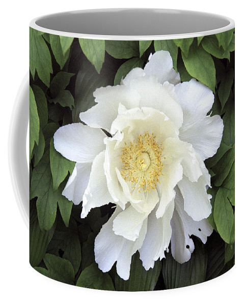 White Coffee Mug featuring the photograph White Peonies by Richard Kitchen