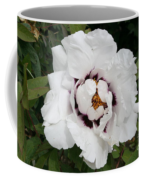 Flowers Coffee Mug featuring the photograph White Peony by Christiane Schulze Art And Photography