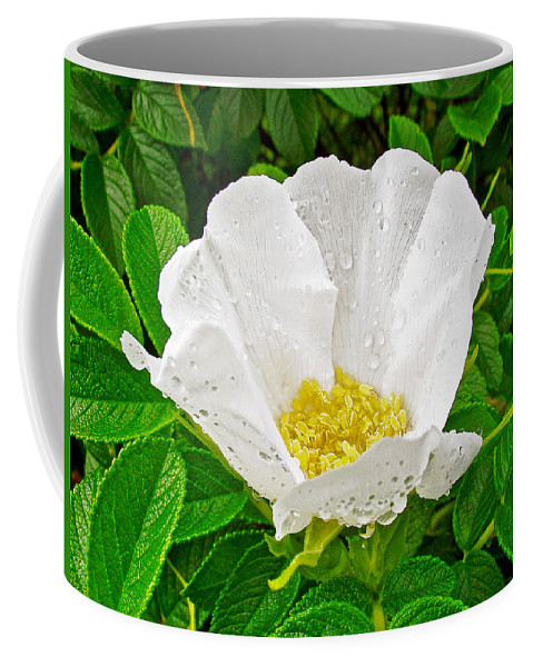 White Rose At Norris Point In Gros Morne National Park Coffee Mug featuring the photograph White Rose At Norris Point In Gros Morne National Park-newfoundland by Ruth Hager