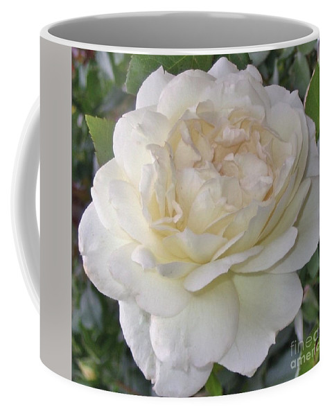 Rose Coffee Mug featuring the photograph White Rose by Graciela Castro