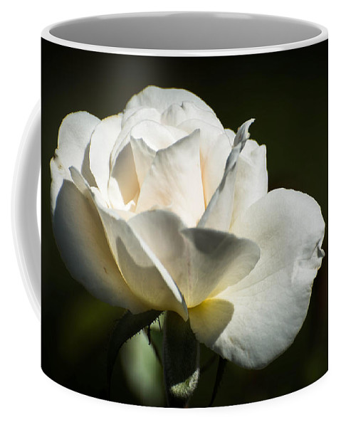 Rose Coffee Mug featuring the photograph White Rose by Michael Moriarty