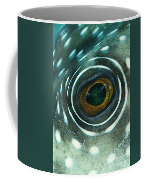 Animal Coffee Mug featuring the photograph White-spotted Pufferfish Eye by Spl