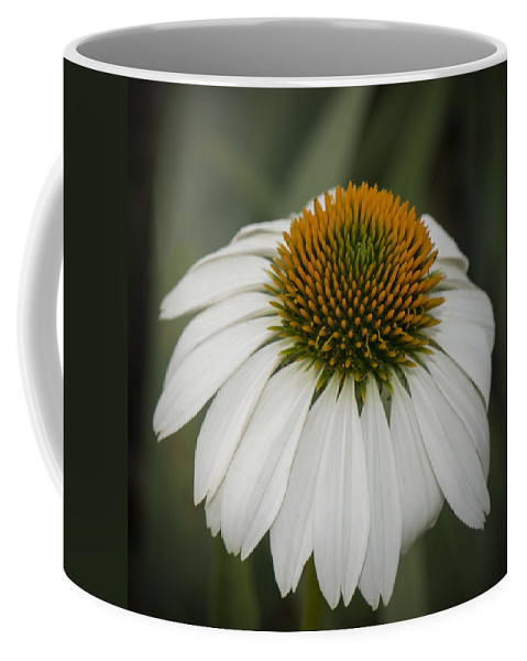 Daisy Coffee Mug featuring the photograph White Swan by Jayne Gohr