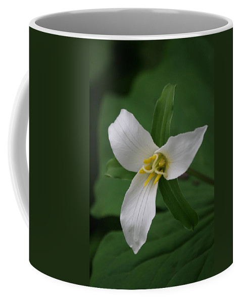 Coffee Mug featuring the photograph White Trillium by Marv Russell