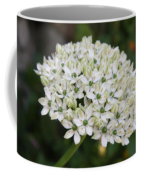 Umbel Coffee Mug featuring the photograph White Umbel by Christiane Schulze Art And Photography