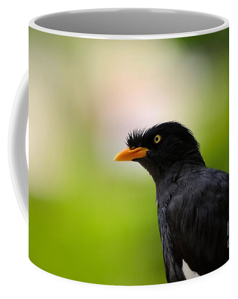 Myna Coffee Mug featuring the photograph White Vented Myna Bird With Feathers Standing Above Beak by Imran Ahmed
