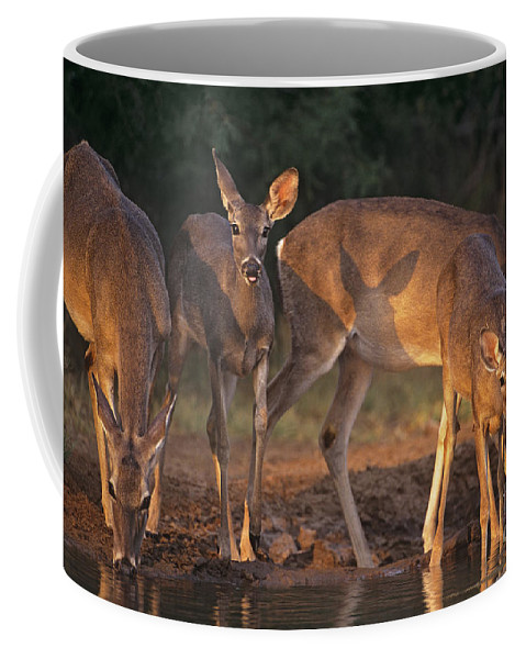 North America Coffee Mug featuring the photograph Whitetail Deer At Waterhole Texas by Dave Welling