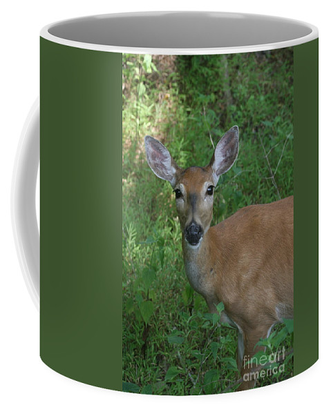 Doe Coffee Mug featuring the photograph Whitetail Portrait In Valley Forge National Park by Ken Keener