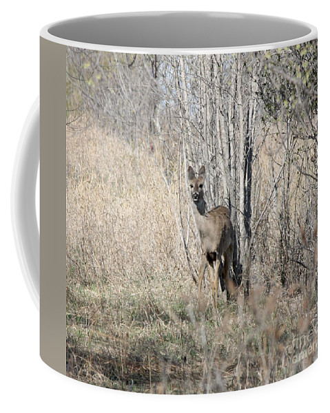 Coffee Mug featuring the photograph Whitetail Undercover by Lori Tordsen