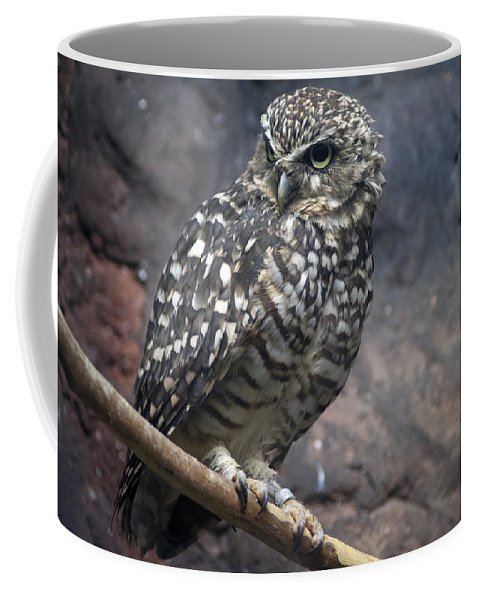 Owl Coffee Mug featuring the photograph Who Are You? by John Dauer