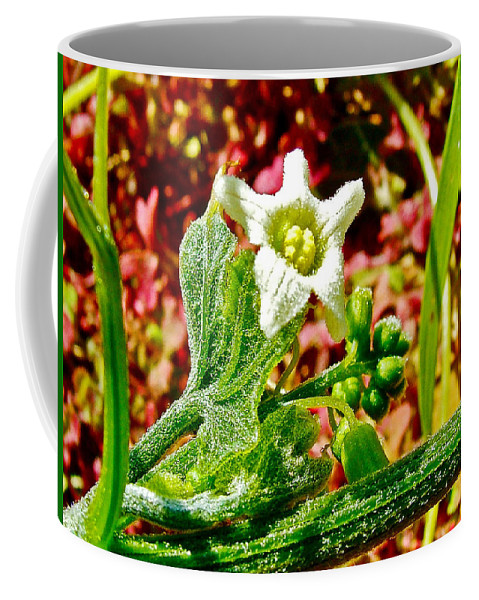 Wild Cucumber In Park Sierra Near Coarsegold Coffee Mug featuring the photograph Wild Cucumber In Park Sierra Near Coarsegold-california by Ruth Hager