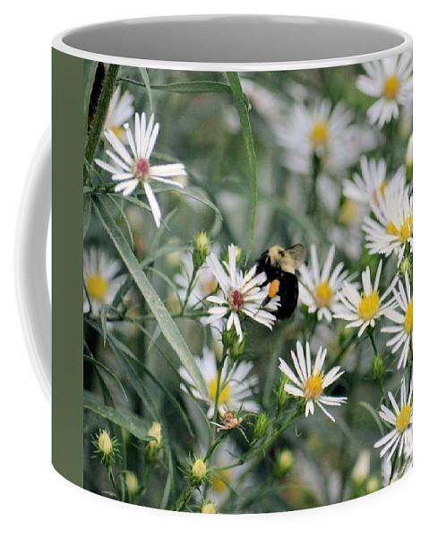 Wild Daisies And The Bumblebee Coffee Mug featuring the photograph Wild Daisies And The Bumblebee by Maria Urso