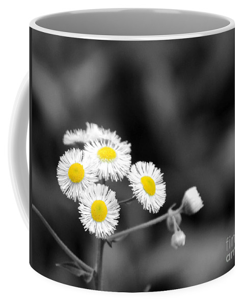 Daisy Coffee Mug featuring the photograph Wild Daisies by Jai Johnson