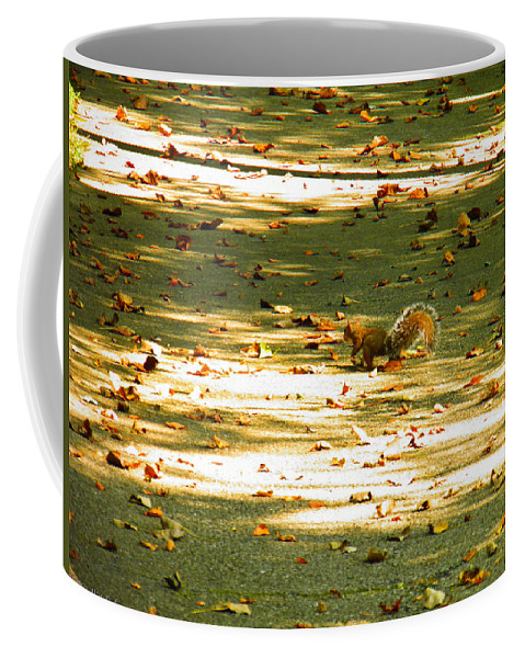 Squirrel Coffee Mug featuring the photograph Wild Gray Squirrel by Nick Kirby