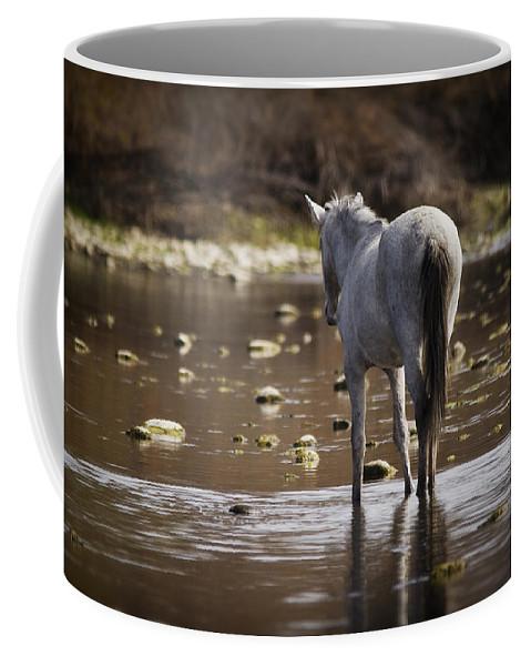 Wild Horse Coffee Mug featuring the photograph Wild Mustang On The River by Saija Lehtonen