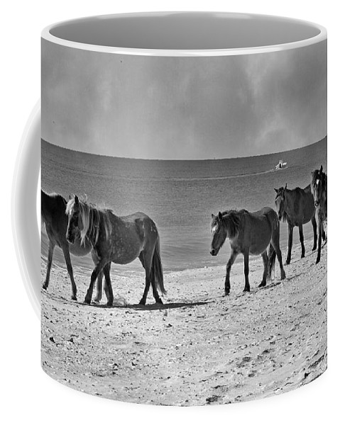 Horse Coffee Mug featuring the photograph Wild Mustangs Of Shackleford by Betsy Knapp