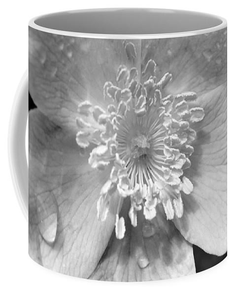 #albertarose Coffee Mug featuring the photograph Wild Rose by Jacquelinemari