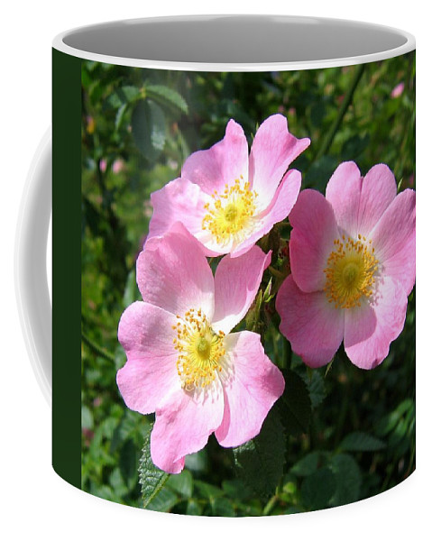 Wild Roses Coffee Mug featuring the photograph Wild Roses 1 by Will Borden