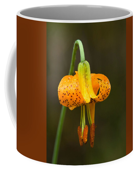 Flowers Coffee Mug featuring the photograph Wild Tiger Lily by Paul DeRocker