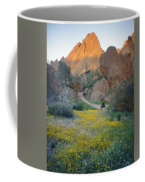 Wildflowers Coffee Mug featuring the photograph 1b6430 Wildflowers In Pinnacles National Park by Ed Cooper Photography