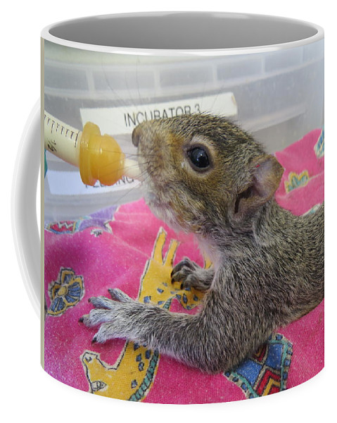 Squirrel Coffee Mug featuring the photograph Wildlife Rehabilitation by Art Dingo