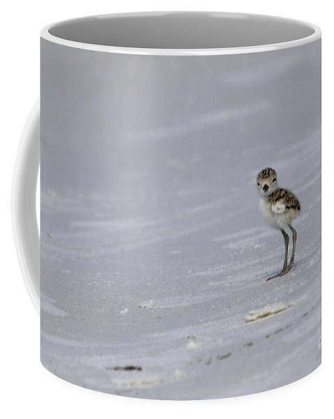 Wilson's Plover Coffee Mug featuring the photograph Wilson's Plover Chick Photo by Meg Rousher