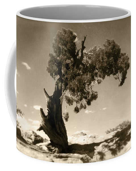 Tree Coffee Mug featuring the photograph Wind Swept Tree by Scott Norris