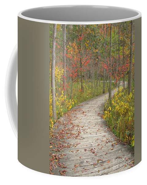 Autumn Coffee Mug featuring the photograph Winding Woods Walk by Ann Horn