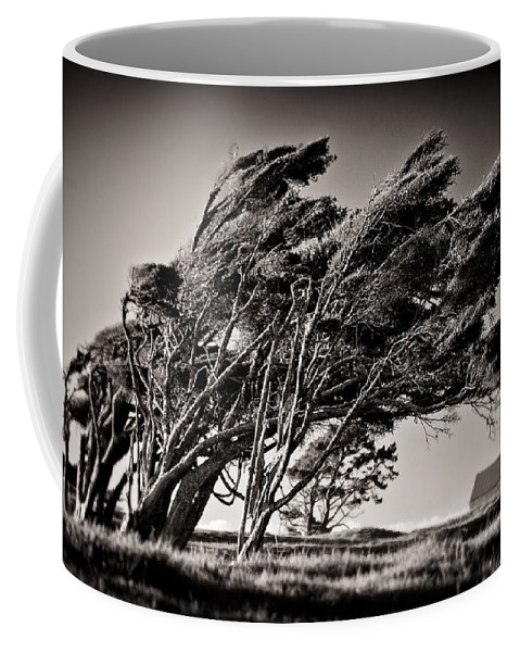 Windswept Trees Coffee Mug featuring the photograph Windswept by Dave Bowman