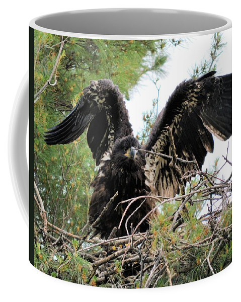 Eagle Coffee Mug featuring the photograph Wing Exercising by Bonfire Photography