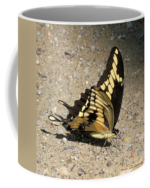 Giant Swallowtail Coffee Mug featuring the photograph Winged Delight by Doris Potter