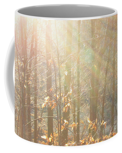Sun Beams Light Through Trees Light Beams Natural Lightscapes Sun Rays Tree Light Winter Woodland Winter Landscapes Winter Forest Forestscapes Arborscapes Treescapes Coffee Mug featuring the photograph Winter Arbor Light by Joshua Bales