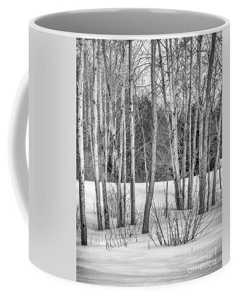 Black Coffee Mug featuring the photograph Winter Birches by Pat Lucas