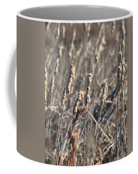 Winter Cattail Abstract Coffee Mug featuring the photograph Winter Cattail Abstract by Maria Urso