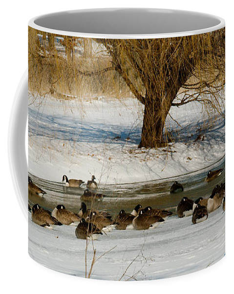 Winter Coffee Mug featuring the photograph Winter Geese - 01 by Larry Jost
