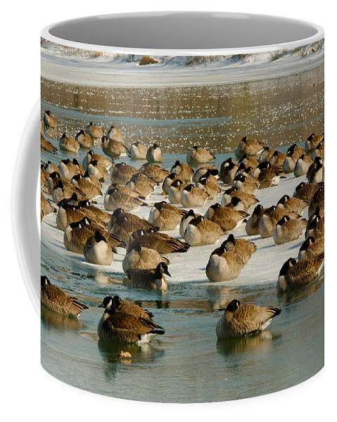 Winter Coffee Mug featuring the photograph Winter Geese - 07 by Larry Jost