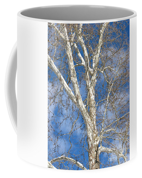Winter Coffee Mug featuring the photograph Winter Sycamore by Ann Horn