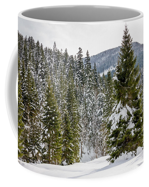 Forest Coffee Mug featuring the photograph Winter Tree by Pati Photography