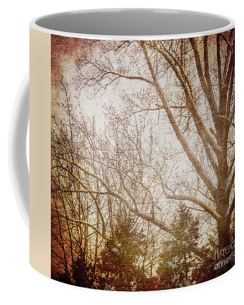 Trees Coffee Mug featuring the photograph Winter Trees by Judy Wolinsky