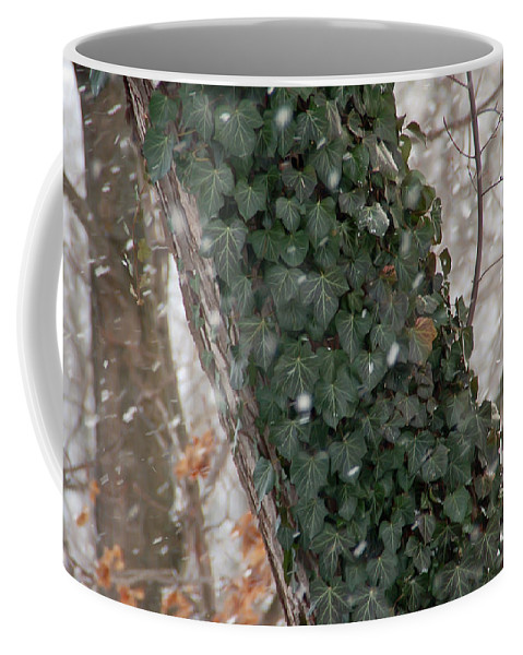 Vine Coffee Mug featuring the photograph Winter Vine by Aimee L Maher ALM GALLERY