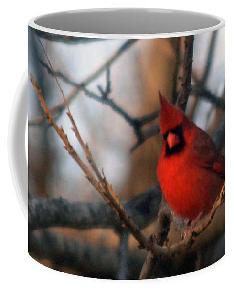 Cardinal Photographs Coffee Mug featuring the photograph Northern Cardinal Red Beauty by Barb Dalton