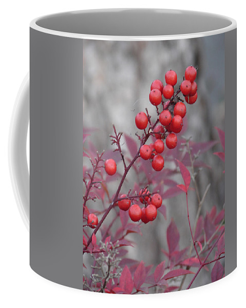 Nature Coffee Mug featuring the photograph Winter's Red by Katherine Sumpter