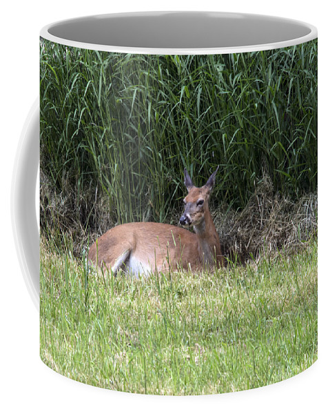 Doe Coffee Mug featuring the photograph Wisconsin Doe Resting by Jayne Gohr