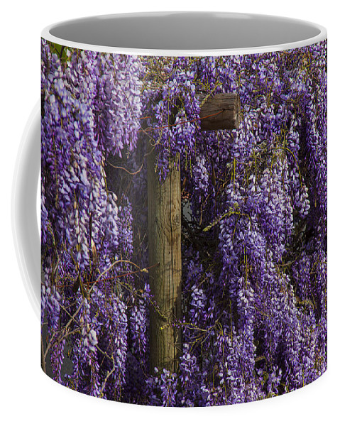 Wisteria Coffee Mug featuring the photograph Wisteria by Garry Gay