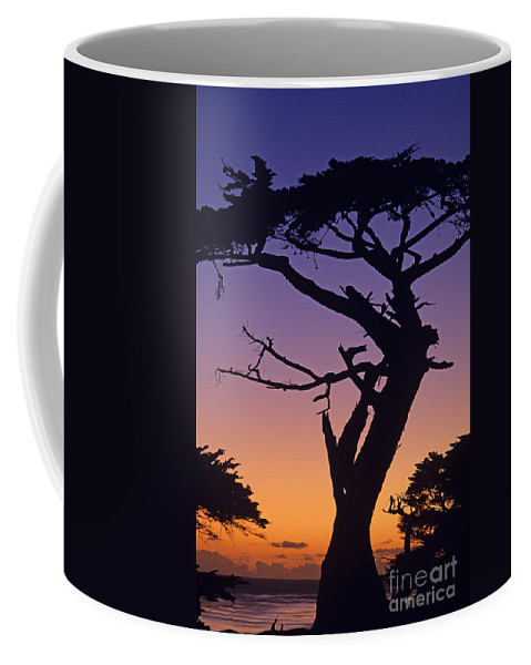 Landscape Coffee Mug featuring the photograph Witch Tree Monterey California by Jim Corwin