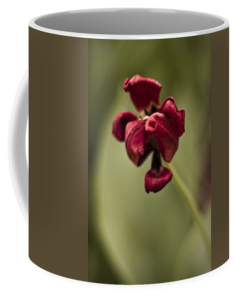 3scape Photos Coffee Mug featuring the photograph Withered Tulip by Adam Romanowicz