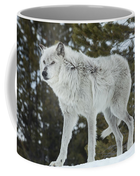 Wolf Coffee Mug featuring the photograph Wolf - Discovery by Fran Riley