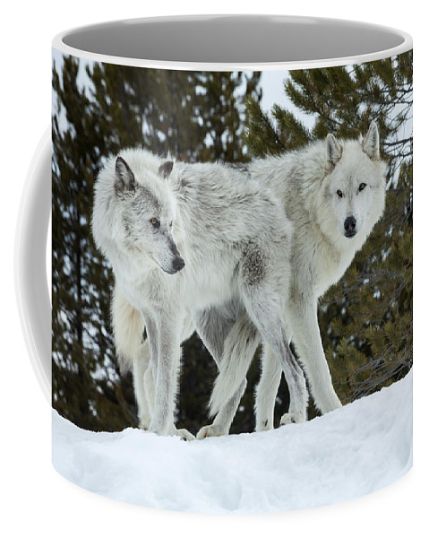 Wolf Coffee Mug featuring the photograph Wolf - Friend by Fran Riley