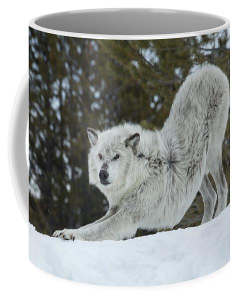 Wolf Coffee Mug featuring the photograph Wolf - Yoga by Fran Riley
